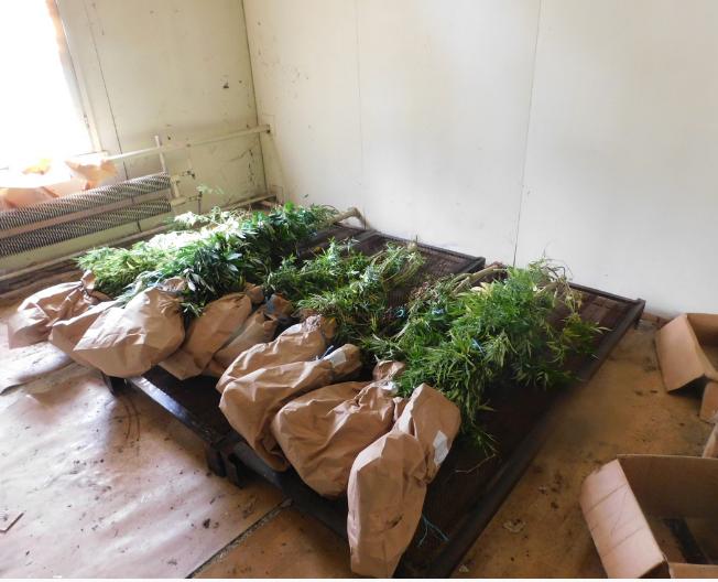 Откриха 20 кг марихуана в къща  на 41- годишен мъж край Разград! СНИМКИ