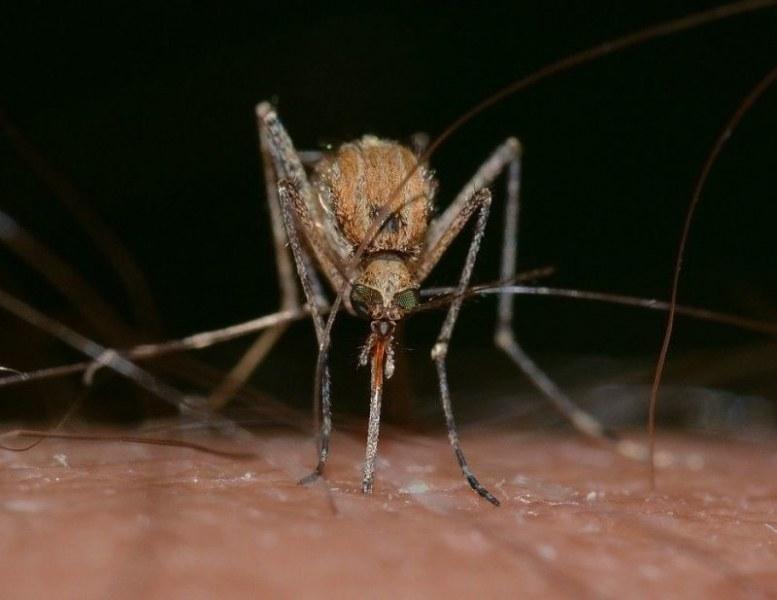 Първи случай на западнонилска треска в Пазарджик, шести за лятото