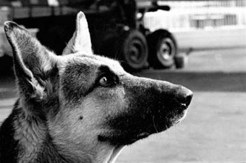 Запознайте се: Това е Палма – кучето, предадено от стопанина си...