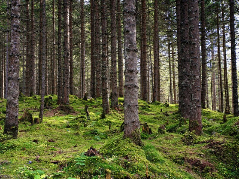 Цели 9 часа спасители издирваха две жени в Средна гора. Откриха ги!