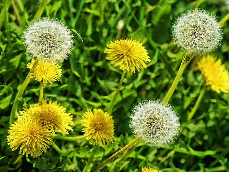 Кои билки да берем есента? Кои са полезни за кашлица, кръвно, диабет...