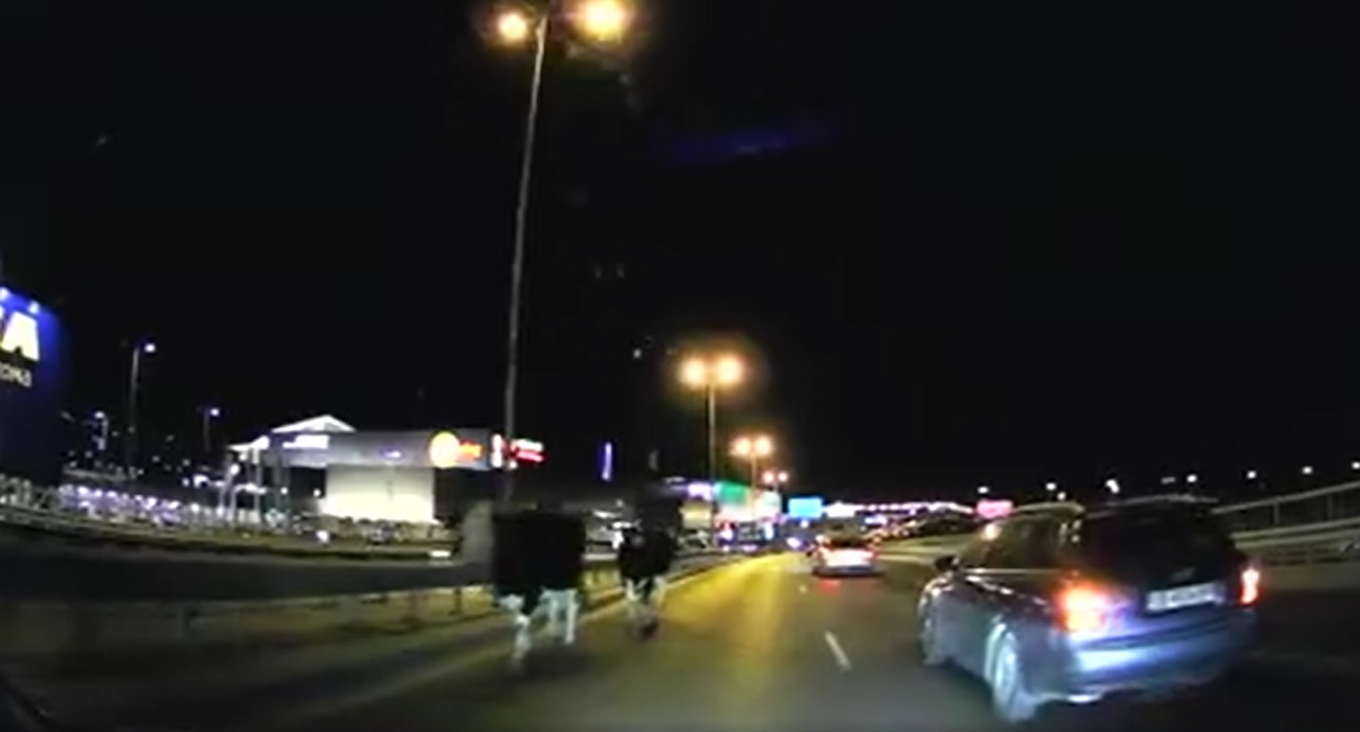 Welcome to Sofia: Крави – спокойно в скоростната лента на