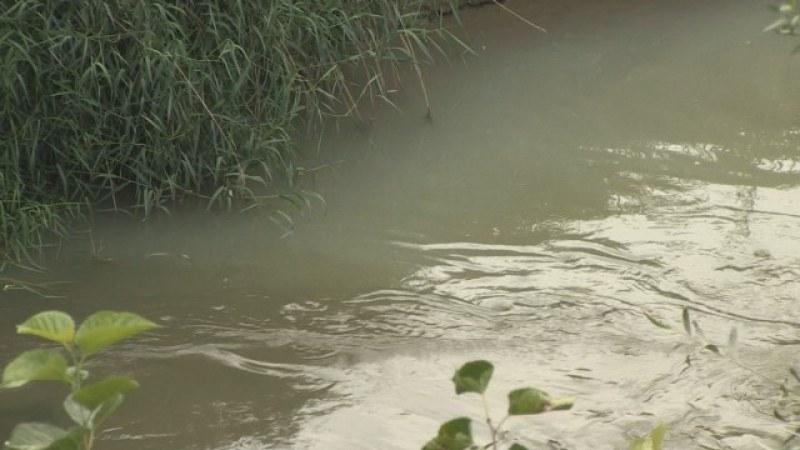 Смрад се носи от река Русенски Лом. Фирма за кори за яйца бълва оцветена вода!