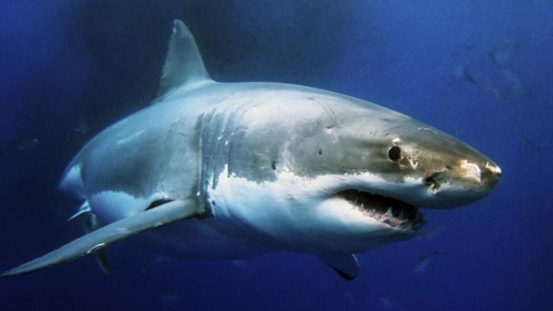 Кръвожадна акула нападна французойка – отхапа и двете й ръце!