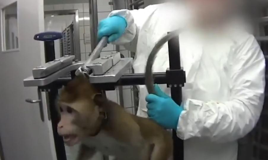 Ужасът се чете в очите им. Издевателства над животни в лаборатория (18+)