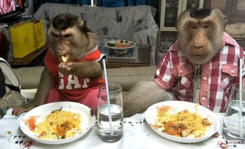 Марулки, спагети и сок, моля! Маймуни на ресторант, без маймунджилъци