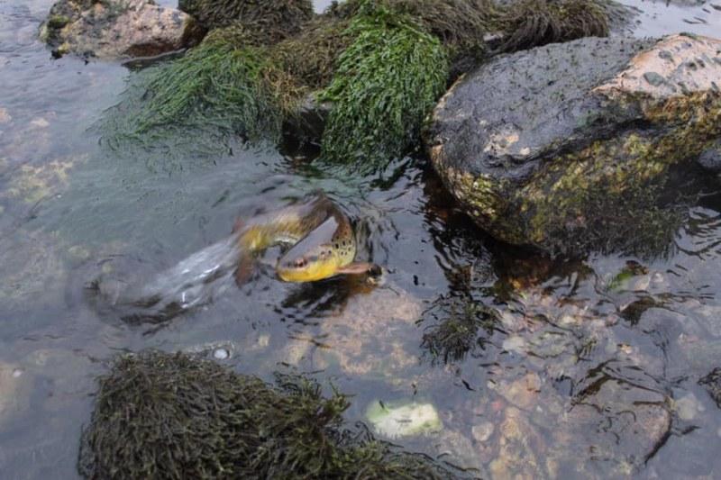 3 дни – два ВЕЦ-а на НЕК пресушавали Въча. Пуснали водата, днес!