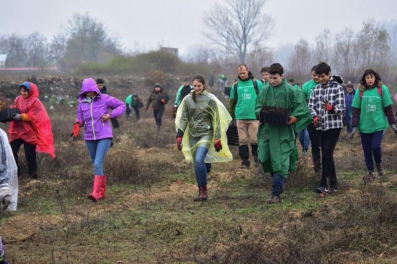 Въпреки дъжда! Първите фиданки от новата гора край Марица до Стамболийски вече са в земята СНИМКИ