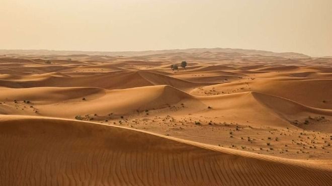 12 дълги дни в пустинята: Австралийка оцеля по чудо след автомобилен инцидент