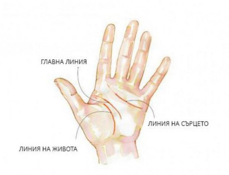 Какво казват линиите на ръцете?