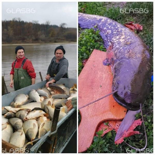 Риба с масата на лъвче уловиха край Карлово!