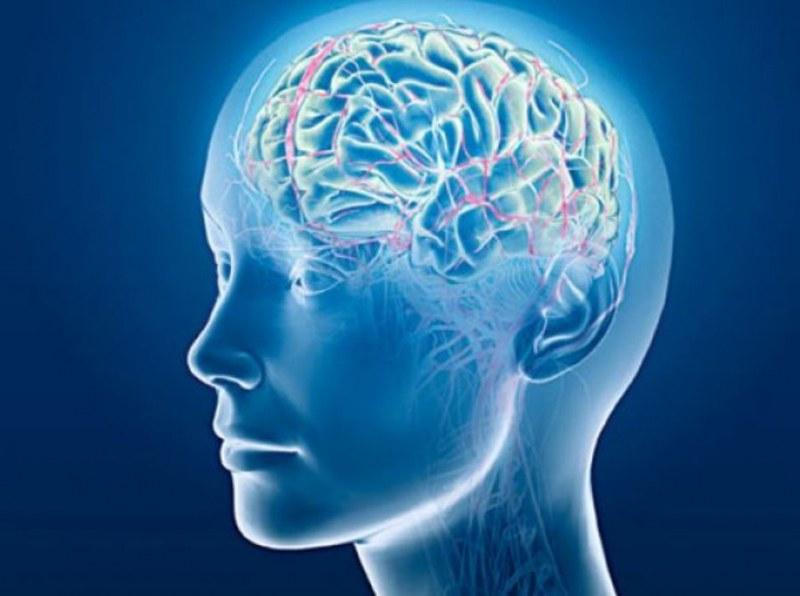 Учени откриха как да забавят стареенето на мозъка