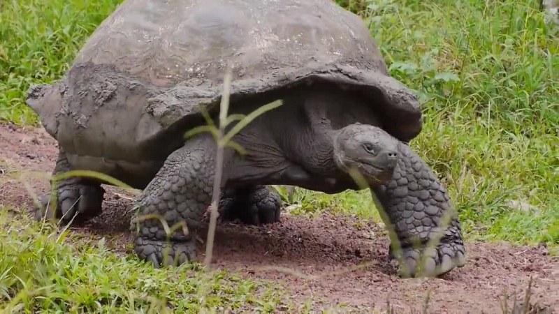 Доказаха, че костенурка е оцеляла след астероида, избил динозаврите