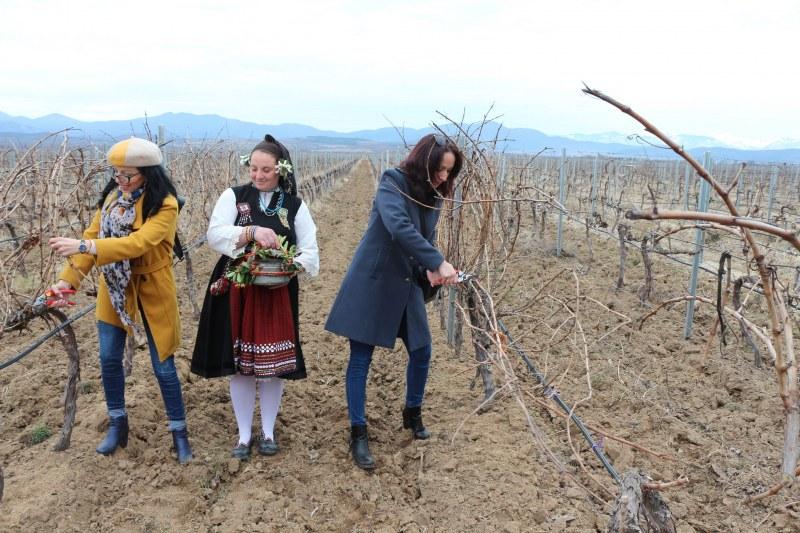Гроздето за едно от най-добрите вина ще зрее край Пловдив!