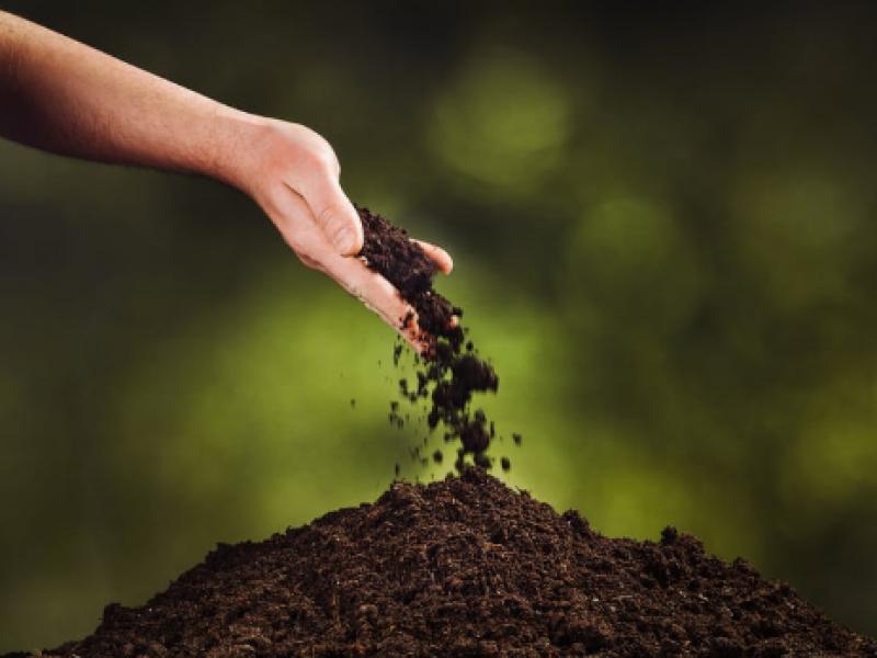 Екологични погребения: Американска фирма ще
