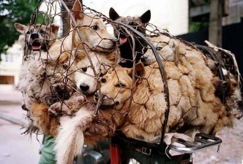 Ами сега? Забраниха хапването на кучета и котки на китайците!
