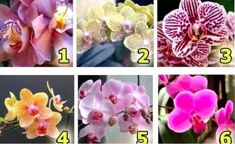 Изберете орхидея и разберете какво е истинското ви щастие ТЕСТ ЗА ЖЕНИ
