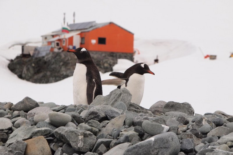 15 непоказвани СНИМКИ на пингвини