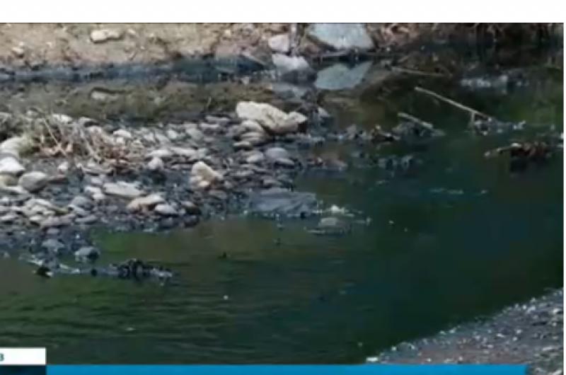 Черна вода потече в две реки в Пловдивско, рибата измря
