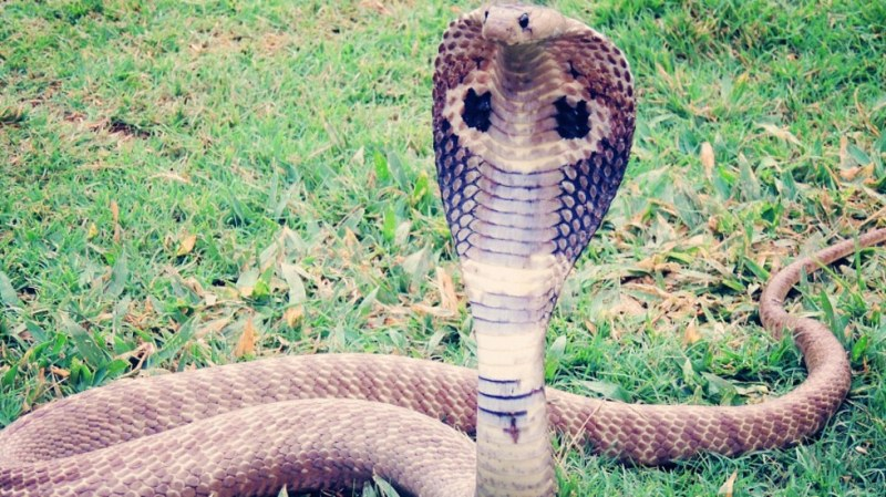 Млад мъж издъхна, след като го ухапа една от змиите му