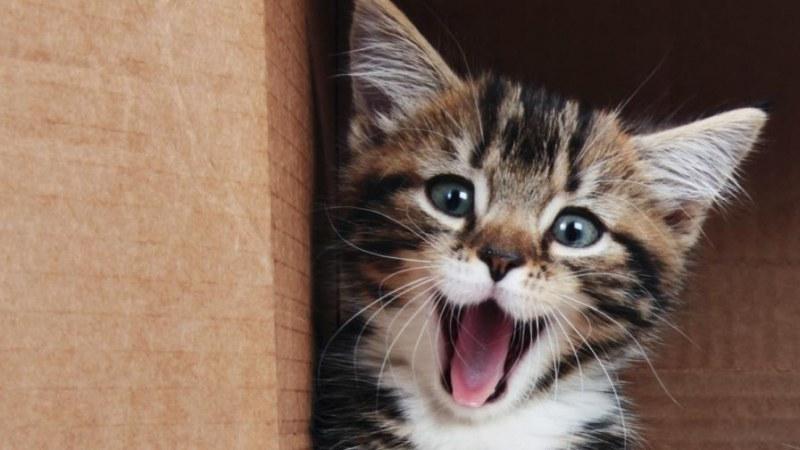 Жена изпадна в кома и почина, след като я облиза котка