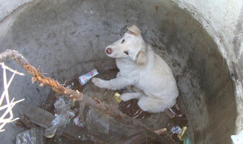 Куче попадна в дълбока шахта, спасиха го на втория ден