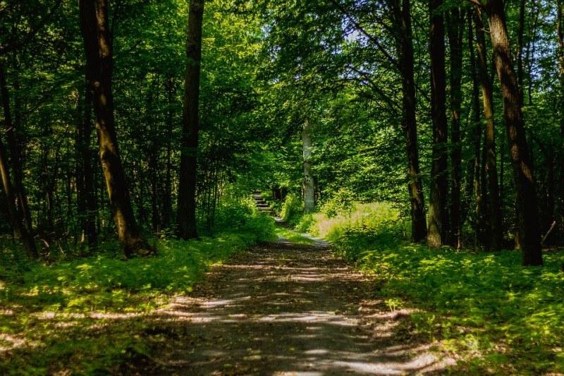 Пет години смятаха мъж за убит -  оказа се, че живее в гората