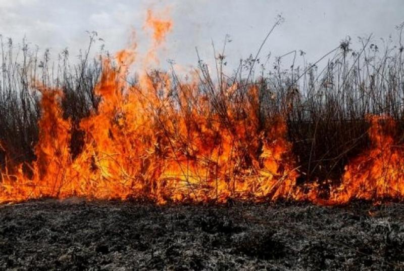 Голям пожар пламна край наш град!