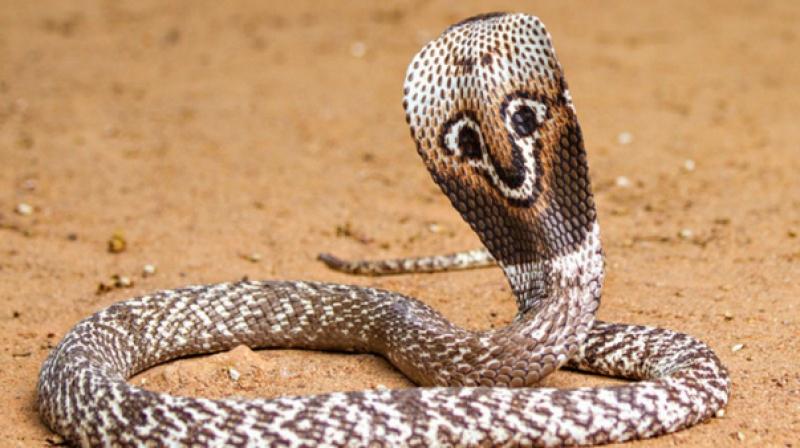 15-те най-смъртоносни животни. Къде в класацията е човекът?
