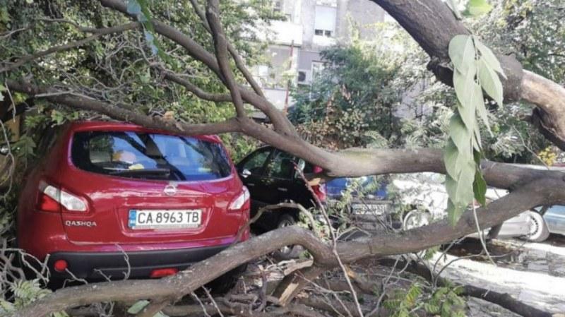 Дърво падна върху коли в центъра на Пловдив