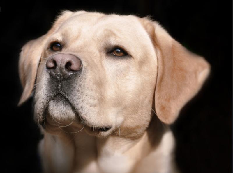 Бременно куче спаси четирима души, но едва оцеля