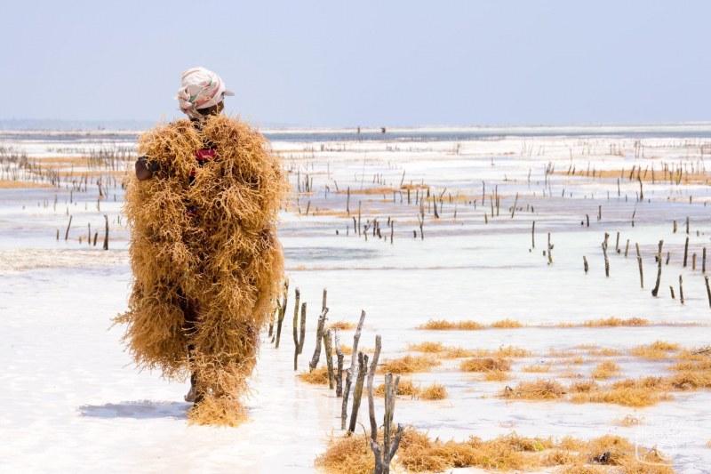 Адвокат от Пловдив посети плантация на водорасли в Африка СНИМКИ