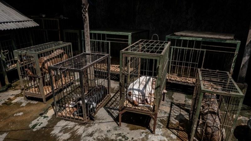 Убили са всички питбули от Арената на смъртта в Пловдив