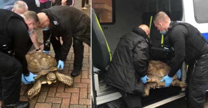 Костенурка избяга от дома си, върнаха я с полиция СНИМКИ