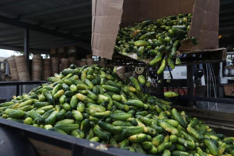 Фермери мамят държавата с пари за отглеждането им