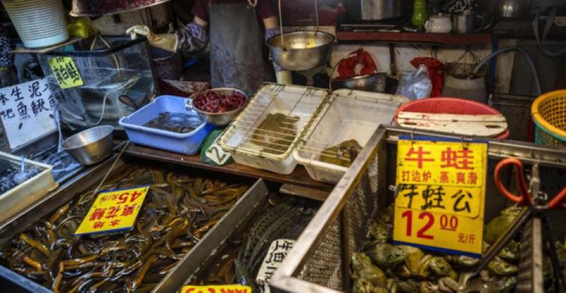 На пазара в Ухан не са продавали прилепи и панголини