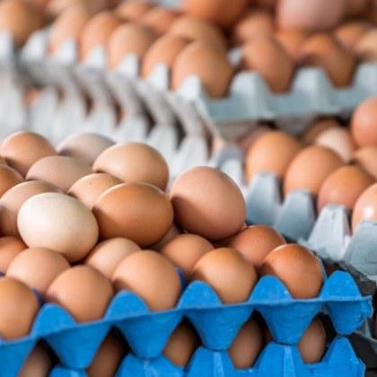 Яйца за преработка – с печат и по магазините! Кой ги внася, опасни ли са?