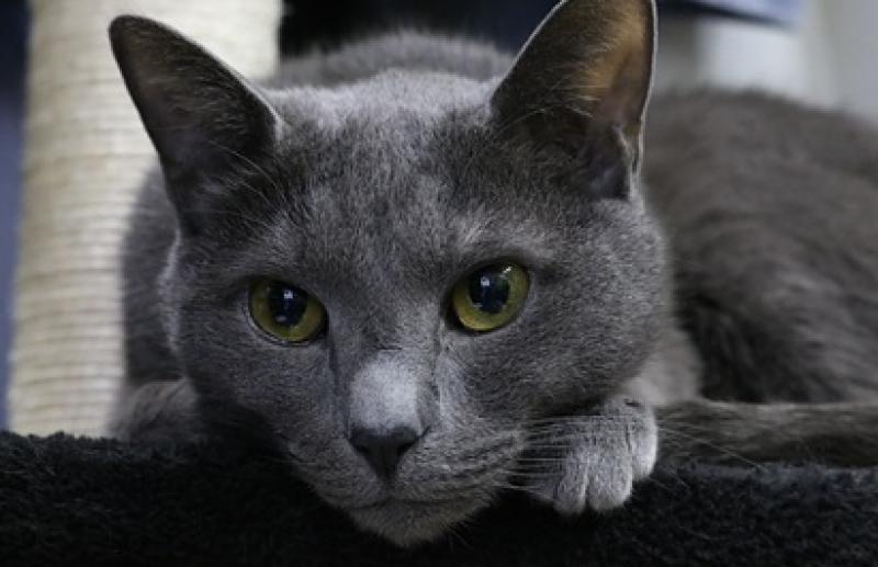 Лакома котка шокира стопаните си преди сватбата им