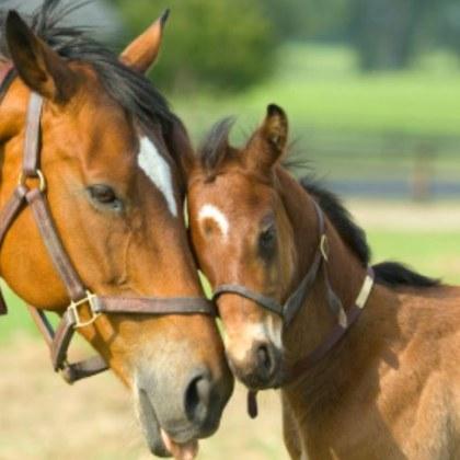 Търсят 30-годишна жена, откраднала 2 коня и три прасета в Пловдивско