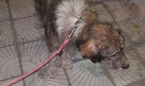 Стопани изоставиха кучето си, вързано до метростанция