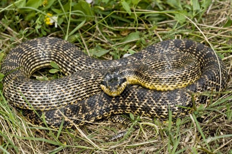 Бум на змии в Смолянско: Влечуги изпълзяха в близост до детска градина