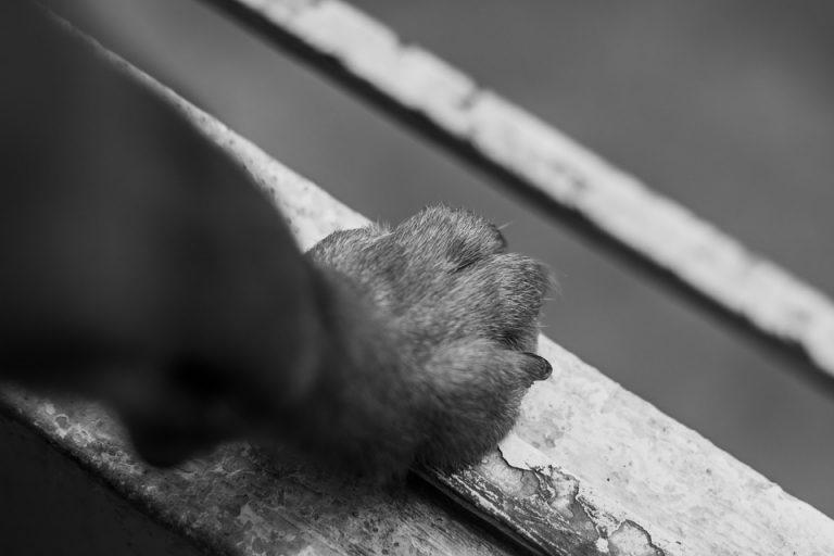 Задържаха мъж, пребил куче след съседски скандал в Търново