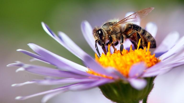 Пчела уби 30-годишен мъж в село край Мизия!  СНИМКА