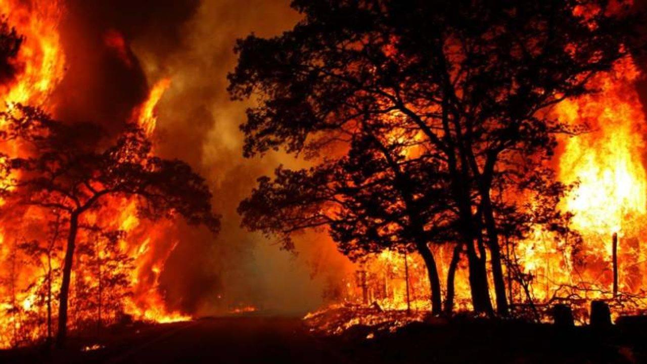 Заради пожарите в Амазония Макрон иска спешни разговори със световните лидери