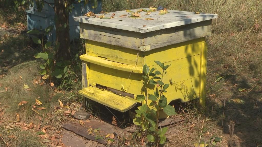 Пчелари на тръни! Ще има ли масов мор заради опасна зараза?