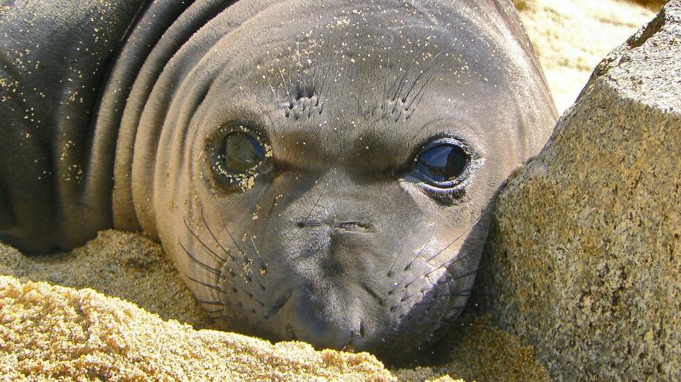 Морски лъвове превзеха популярен плаж в Калифорния (СНИМКА)