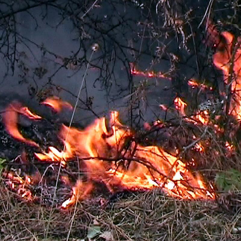 Монтана: 900 овощни дръвчета са изгорели при пожар в село Василовци